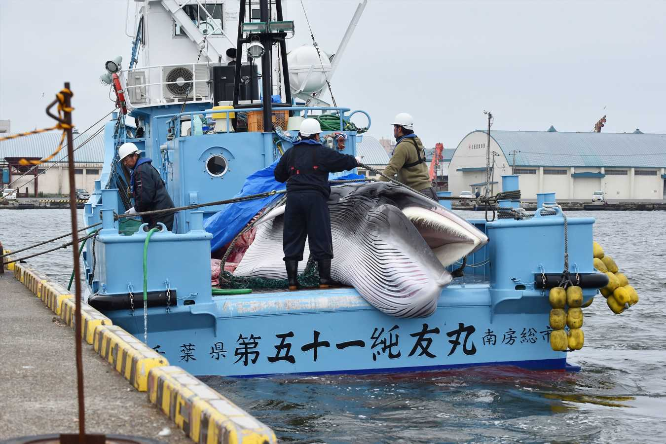 Japan Resumes Commercial Whaling After Three-Decade Break and Kills Two Whales on the First Day