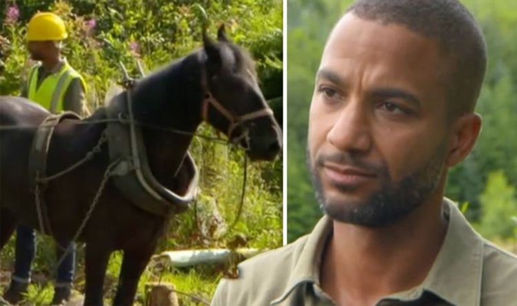Countryfile sparks debate as viewers divided over working animals episode 'A bit cruel'