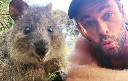 How Selfies with Quokkas on Rottnest Island Are Helping the Quokka Population Bounce Back