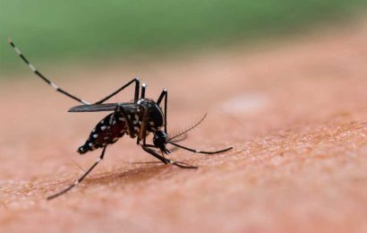 Potentially fatal mosquito-borne EEE virus detected in Delaware