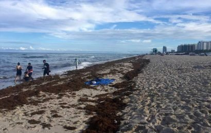 South Florida trying to save beaches from invading seaweed