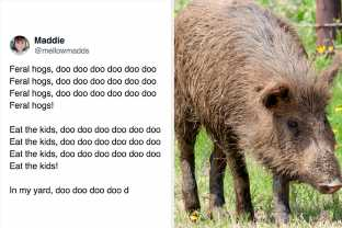 Here They Are, The Best And Funniest Feral Hog Tweets