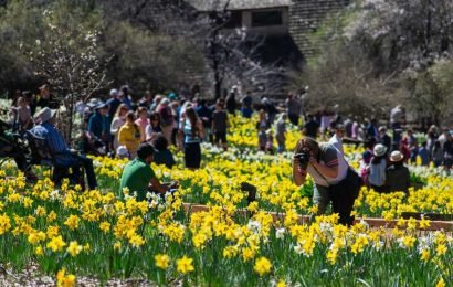 Hordes of Instagrammers are killing California's flowers