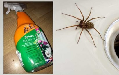 Home Bargains shoppers are raving about a 99p spider repellent spray to keep creepy crawlies away