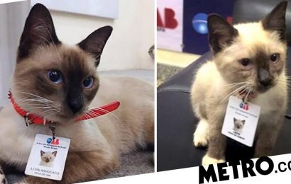 Homeless cat lands a job at a law firm after complaints about him hanging around