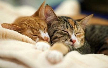 Your Cat Does Love You! New Study Finds Cats Form Attachment Bonds With Their Owners
