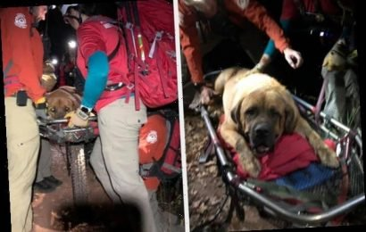 A Really Big Dog Named Floyd Had To Be Rescued During A Hike And It Was A Lot