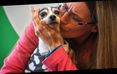 Dog lost since 2007 found over 1,000 miles away