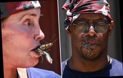 I'm A Celebrity fans disgusted as the celebs hold critters in their mouths during sickening Bushtucker Trial – The Sun