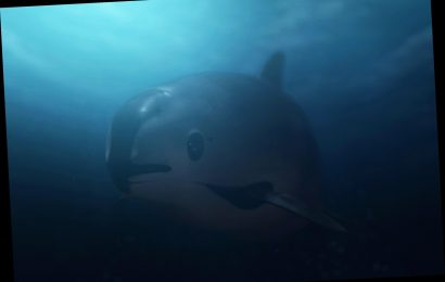 Leo DiCaprio's Nat Geo Thriller Exposes How Quest for 'Cocaine of the Sea' Kills Rare Vaquita