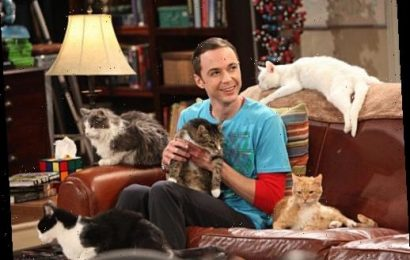 The Big Bang theory fans spot ANOTHER Sheldon Cooper plot hole as bosses backtracked over cat allergy – The Sun