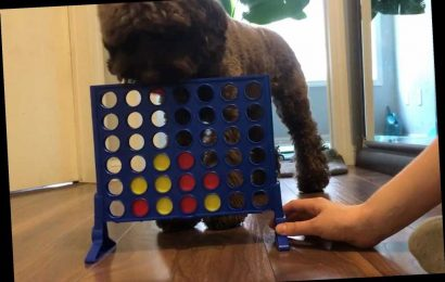 Meet the dog that can play Connect 4