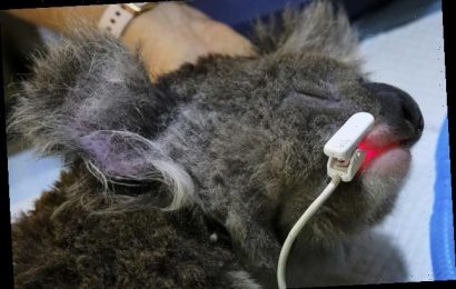 More Than A Billion Animals Died In Australia's Bushfires. These Heroes Are Rescuing The Survivors.
