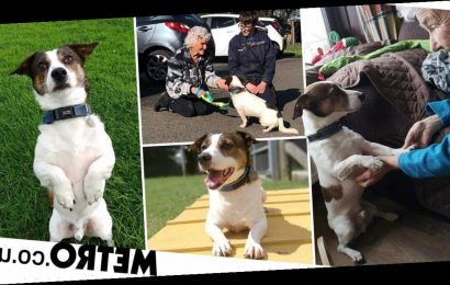 Smithy the rescue dog has finally found his forever home