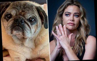 "Denise Richards left ""devastated"" as her beloved dog Henry dies amid Brandi Glanville hook-up rumors – The Sun"