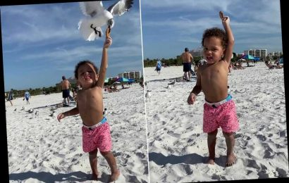 The hilarious moment a toddler's cookie gets snatched by a sea gull