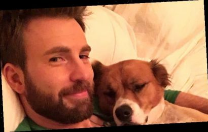 Chris Evans Thinks You Should Adopt a Dog Right Now!