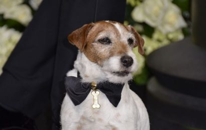 Uggie the star of The Artist wins greatest movie mutt award