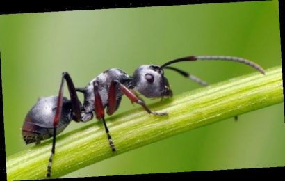 How to get rid of ants from your home