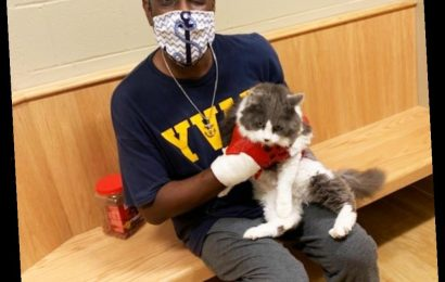 Man Reunites With Lost Cat While Looking for a New Pet in Maine Animal Shelter