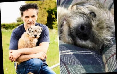 'Supervet' devastated as his dog Keira fights for life after being hit by a van
