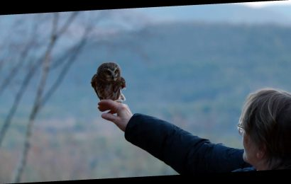 Tiny Owl Found Stuck in the Rockefeller Center Christmas Tree Released Back into the Wild