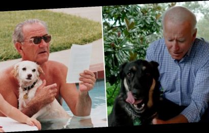 Actually, the Bidens' pup isn't the first rescue dog in the White House