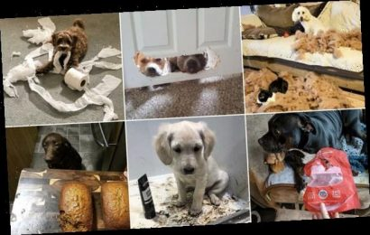 Owners share photos of their adorable pets pulling 'guilty faces'