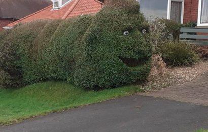 Sideswipe: January 14: Creative hedge trimming