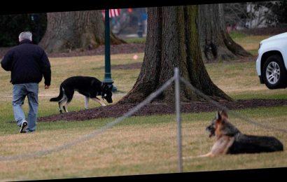 President Joe Biden explains dog Major's biting incident: 'He's a sweet dog'