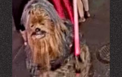 Chewbacca Wanted for Stabbing in New Orleans