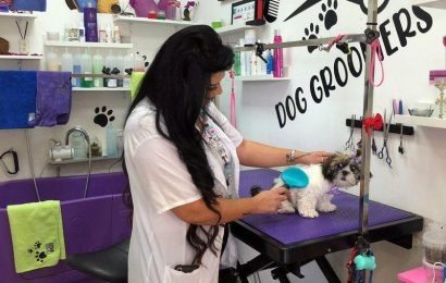 COVID forces switch from hairdresser to dog groomer