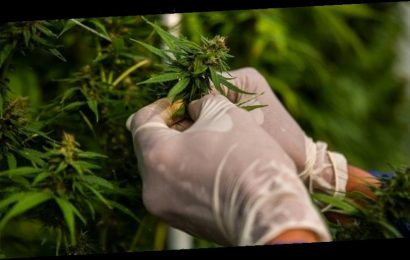 This Michigan University Is Offering a Groundbreaking Cannabis Chemistry Scholarship