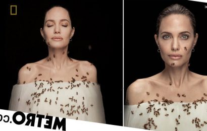 Angelina Jolie covered in bees for dramatic shoot after not showering for days