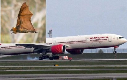 Live flying bat forces NYC-bound plane back to New Delhi