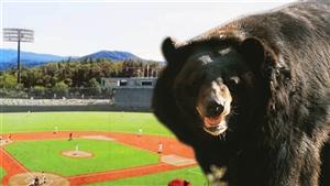 Bear Invades Olympic Softball Stadium, Still On The Loose!