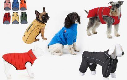 9 Best Dog Coats 2021 | The Sun UK