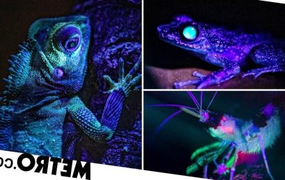 Take a look at these stunning rare photos of glow-in-the-dark amphibians